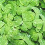 Zielono MI – testujemy Medical Spa w Zielonkach